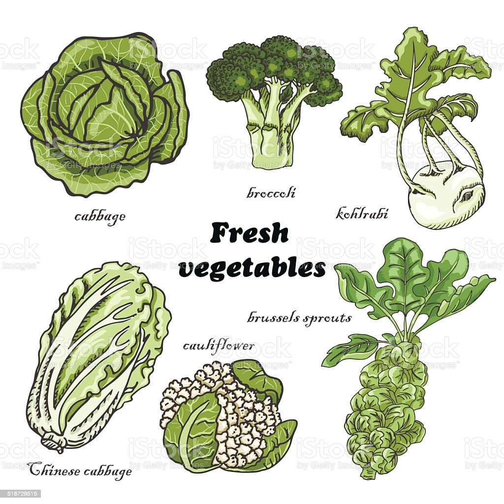 Set of cabbages vector art illustration