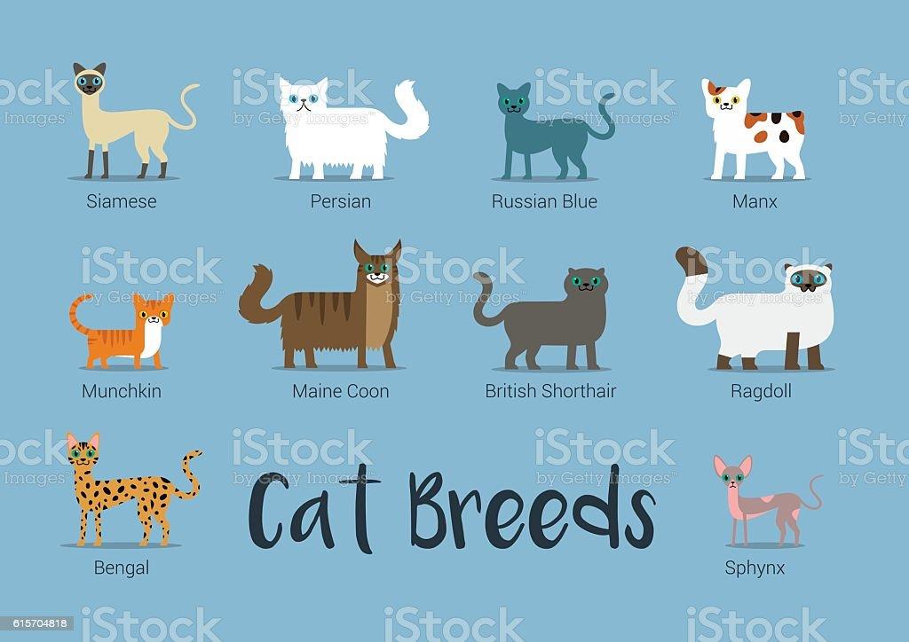Set Of Cat Breeds Vector Illustration vector art illustration