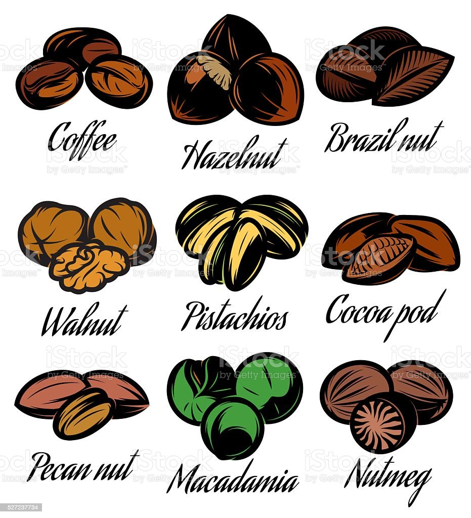 set of colored symbols patterns different seeds, nuts, fruits vector art illustration
