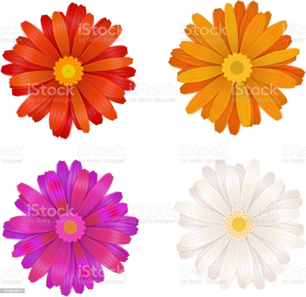 Set of colourful gerbera flowers on white vector art illustration