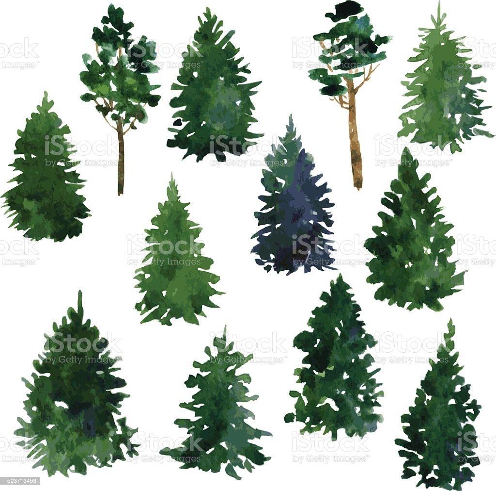 set of conifer trees vector art illustration
