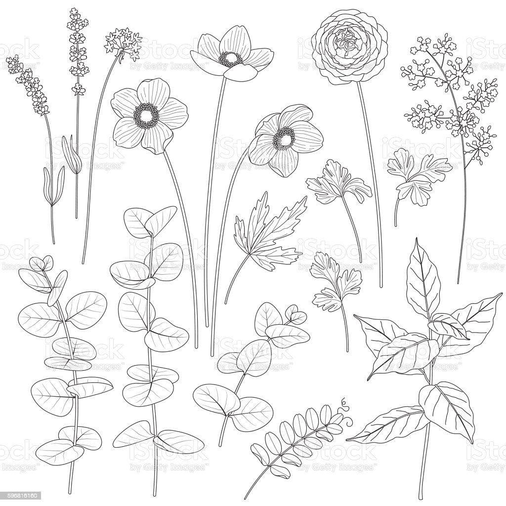 Set of contoured flowers and leaves. vector art illustration