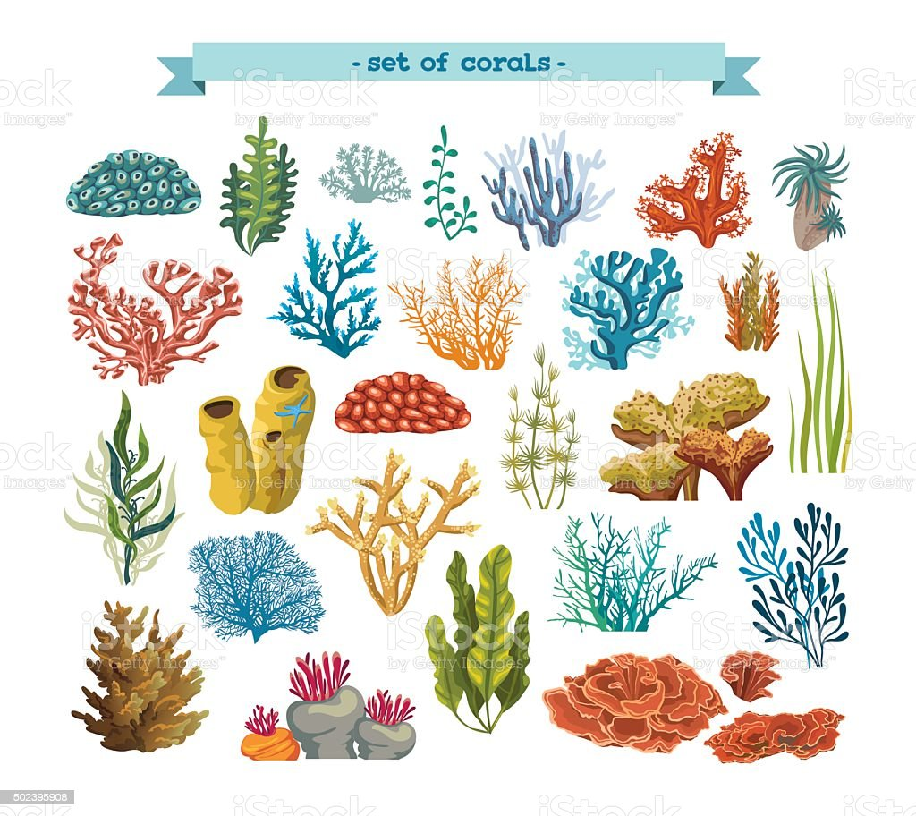 Set of corals and algaes. vector art illustration