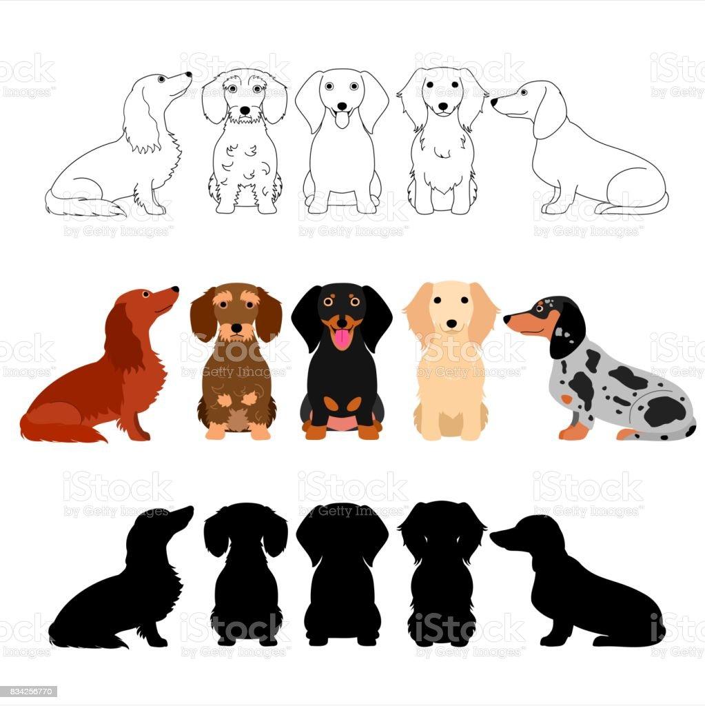 set of Dachshund group vector art illustration