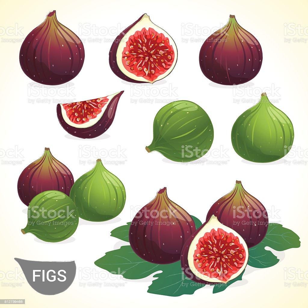 Set of dark fig and green figs in vector vector art illustration