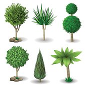 Set of decorative plants