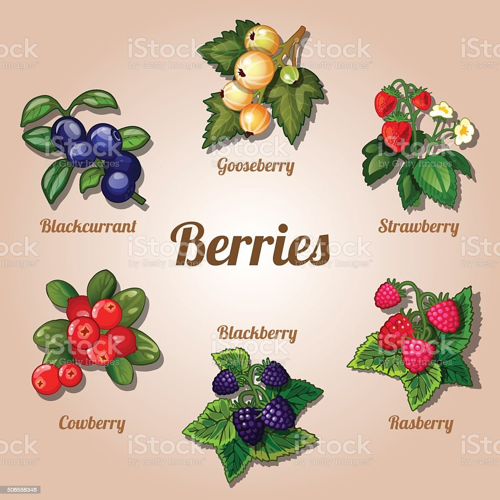 Set of delicious berries various kinds vector art illustration