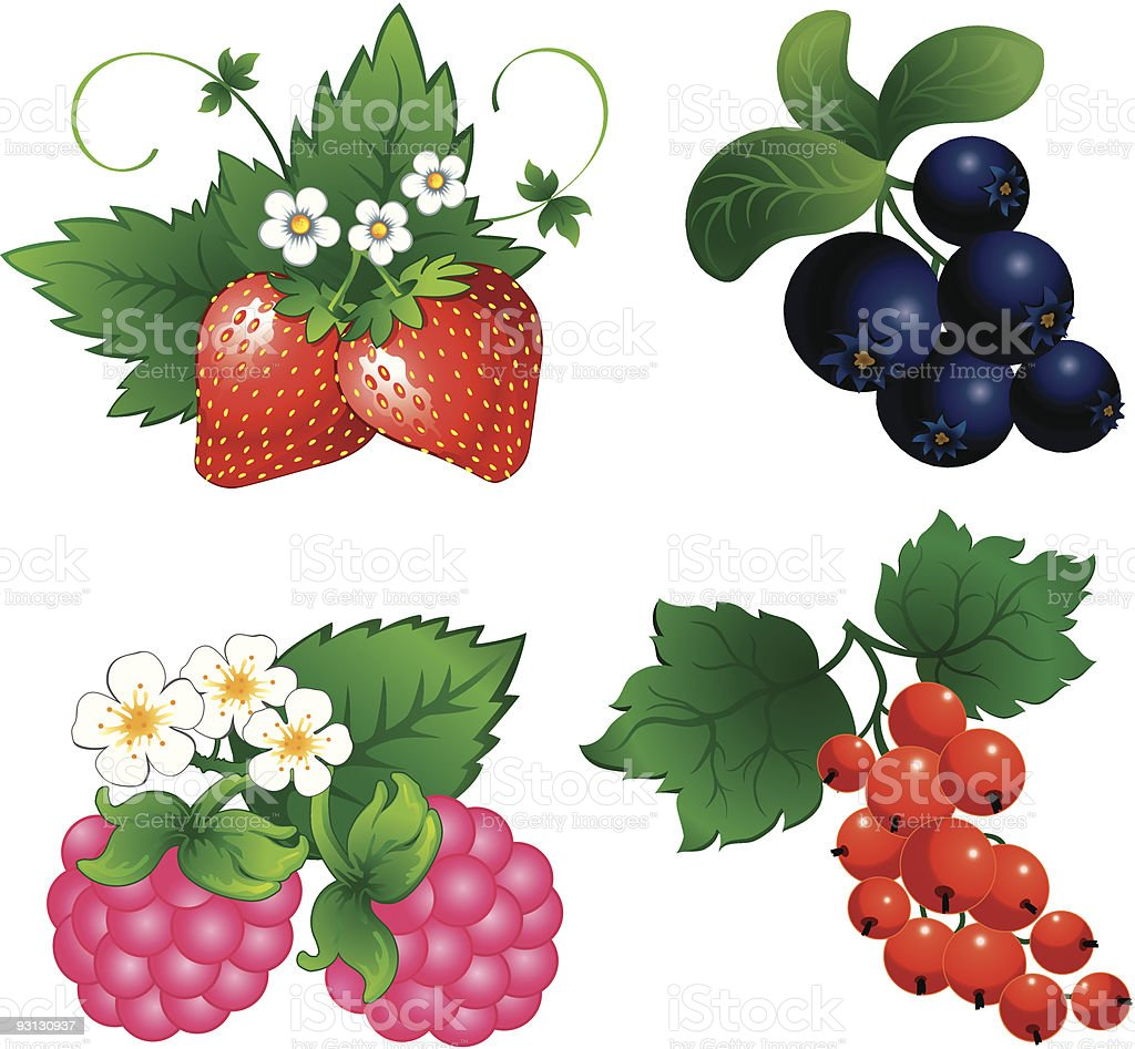 Set of different berry drawings royalty-free stock vector art