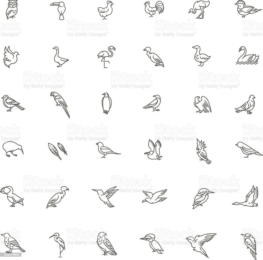 Set of different birds vector art illustration
