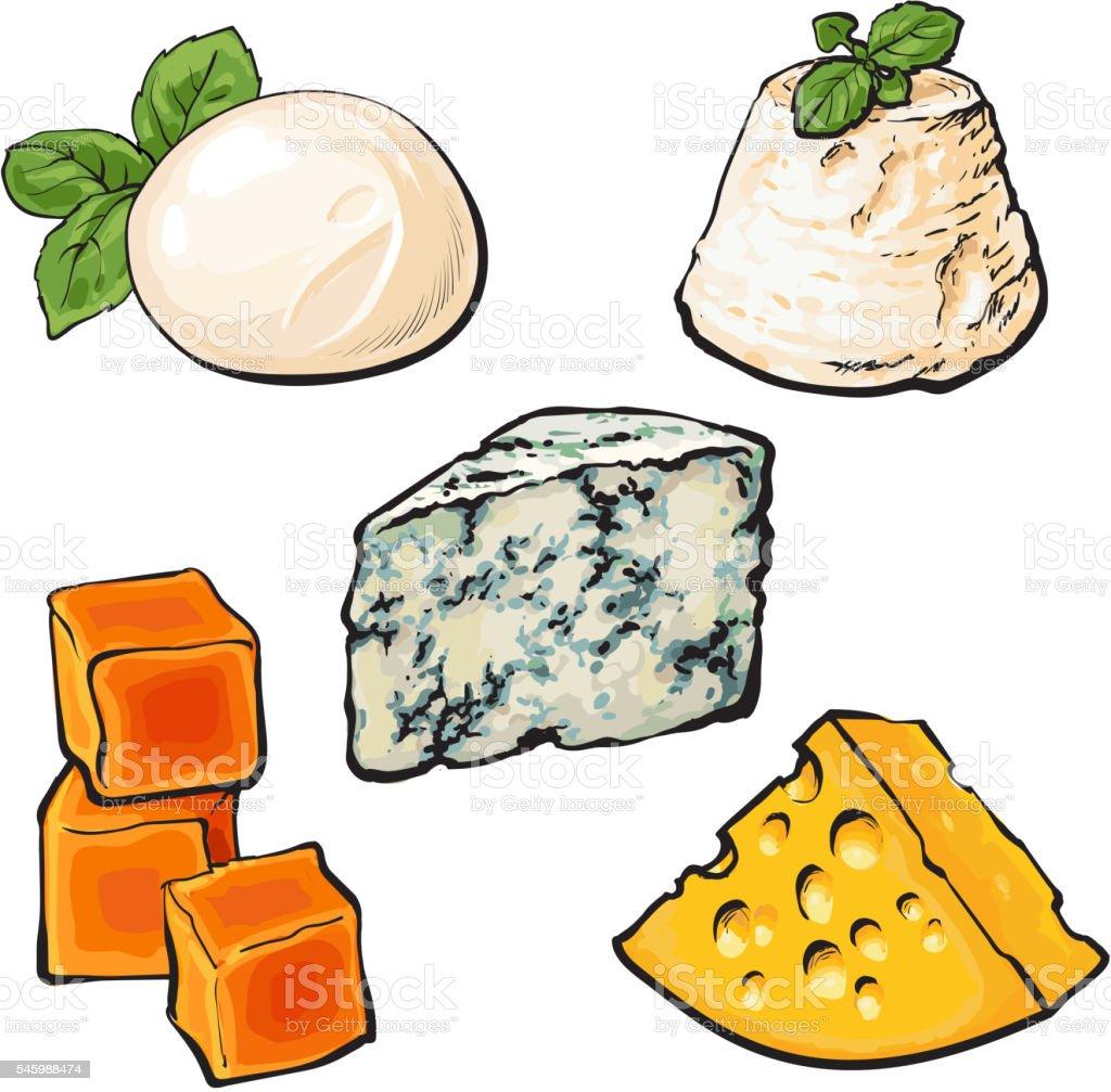 Set of different cheeses mozarella, cheddar, Roquefort, camembert maasdam vector art illustration