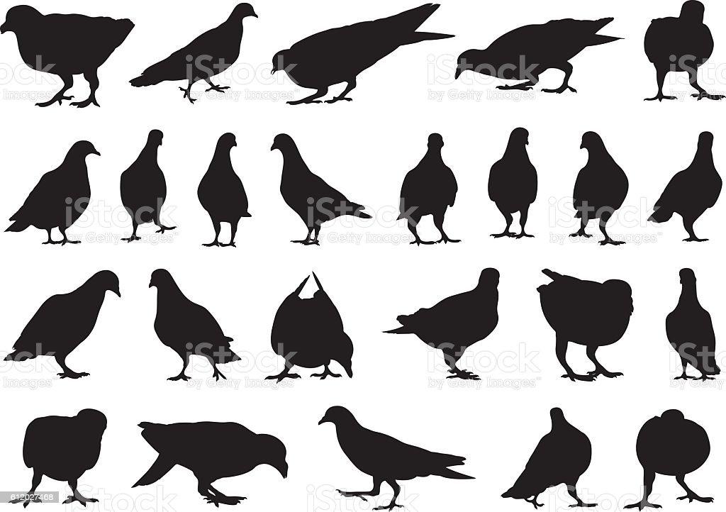 Set of different doves vector art illustration