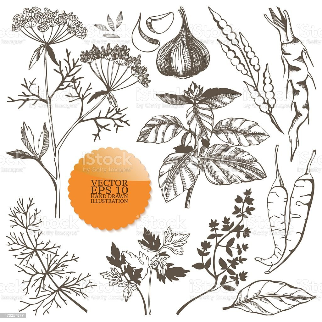A set of different drawings of spices and herbs vector art illustration