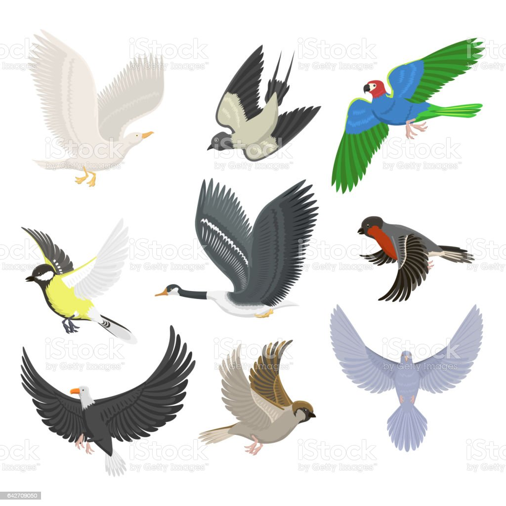Set of sketches of flying swallows stock vector illustration - Set Of Different Flying Birds Vector Illustration Royalty Free Stock Vector Art