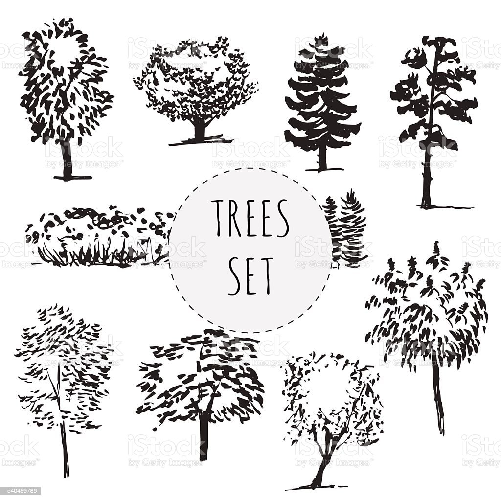 Set of different types hand drawn trees vector art illustration