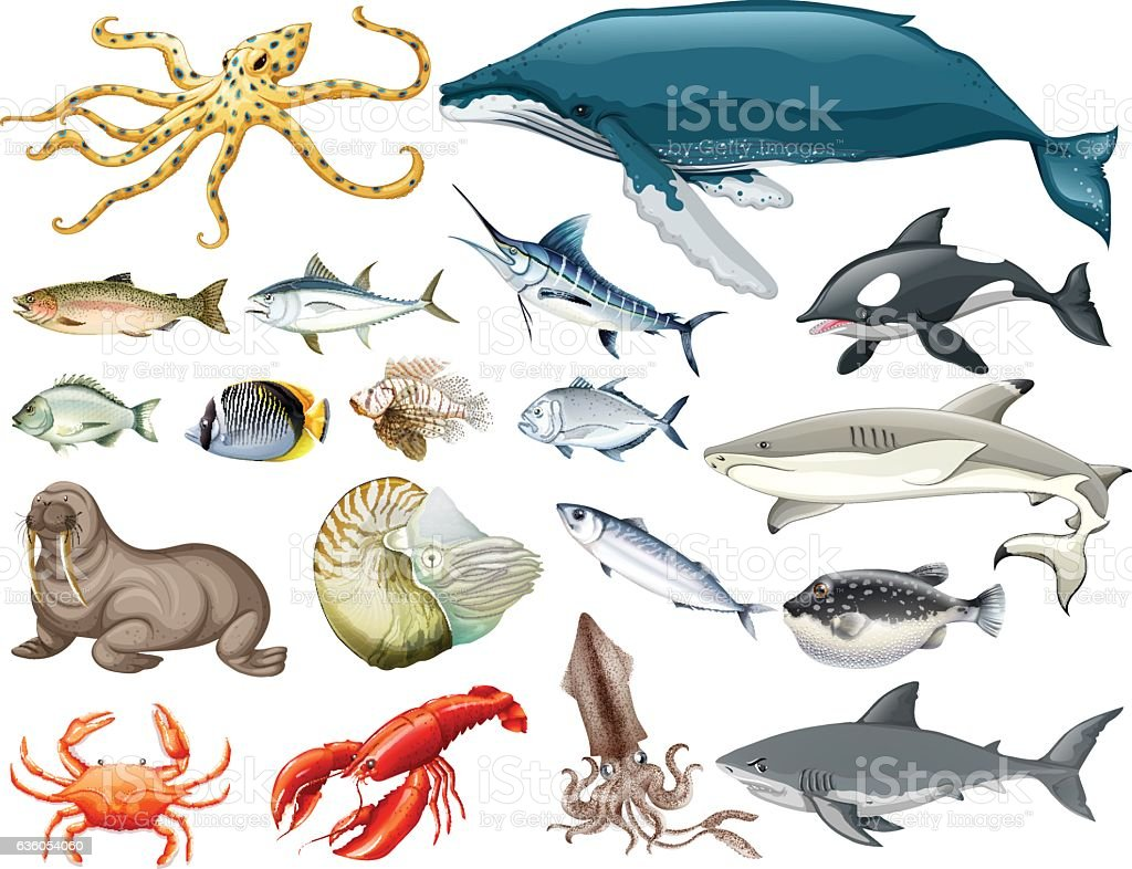 Set of different types of sea animals vector art illustration