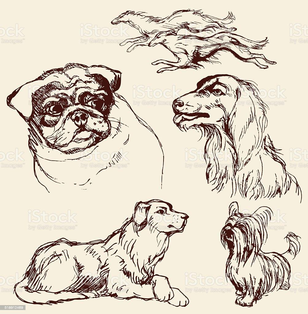 Set of Dogs - Labrador retriever, hound, pug, setter, lap-dog vector art illustration