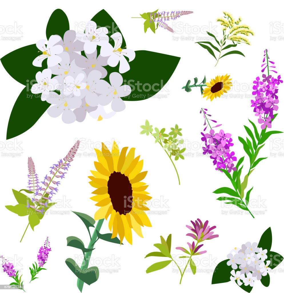 Set of drawing wild flowers vector art illustration