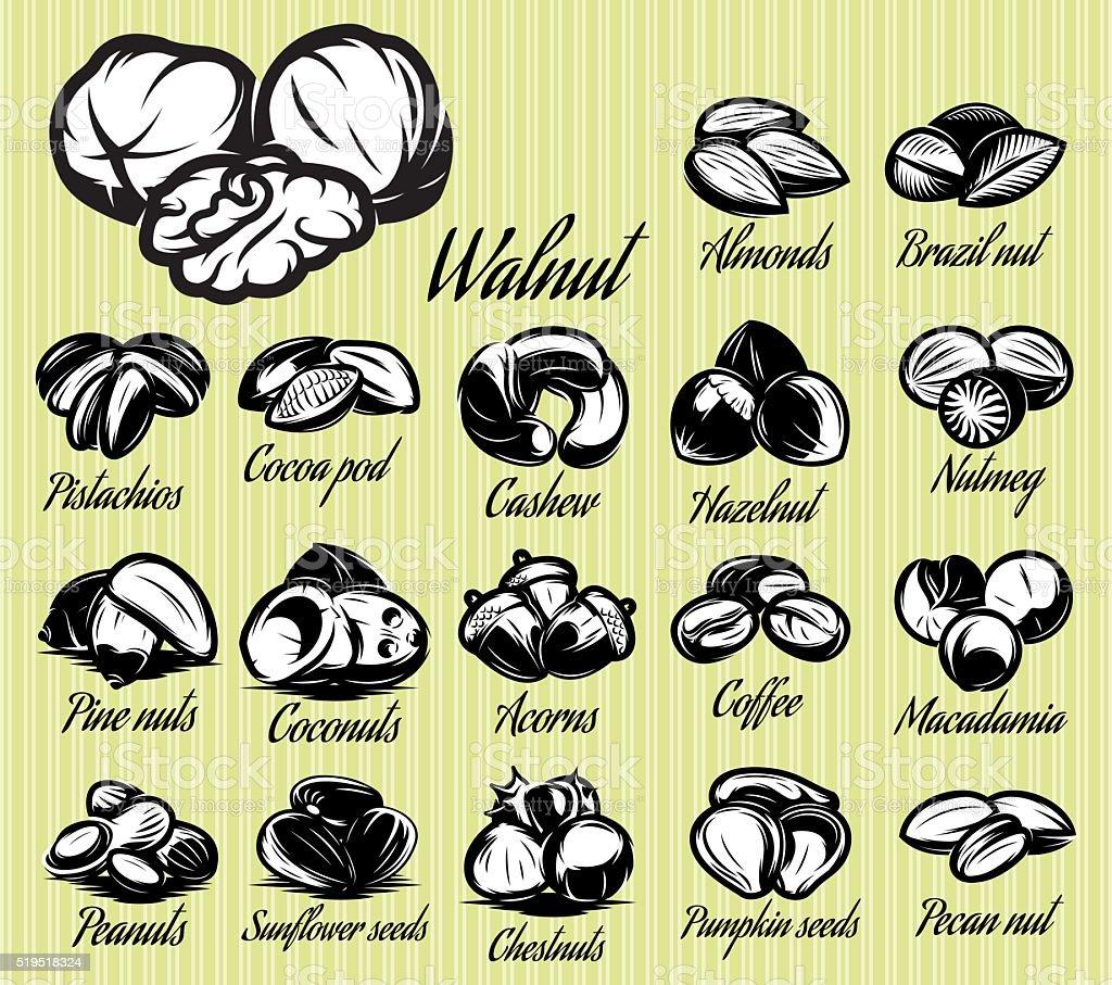 set of eighteen stylish vector templates of nuts for menu vector art illustration