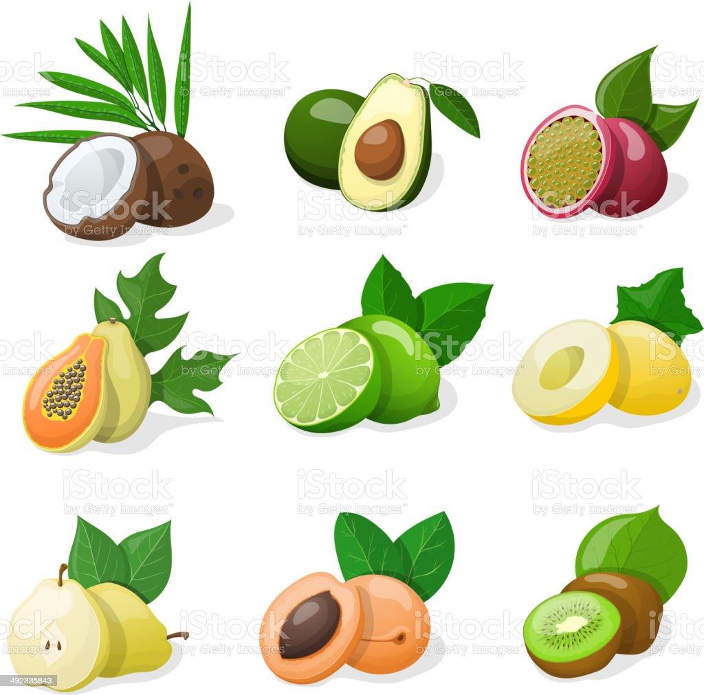 Set of exotic fruit. Vector illustration vector art illustration