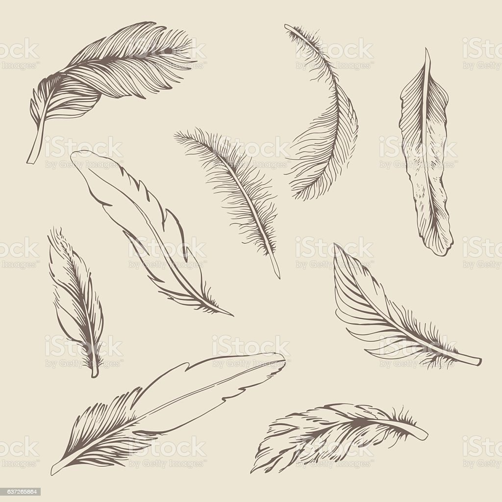 set of feather vector art illustration