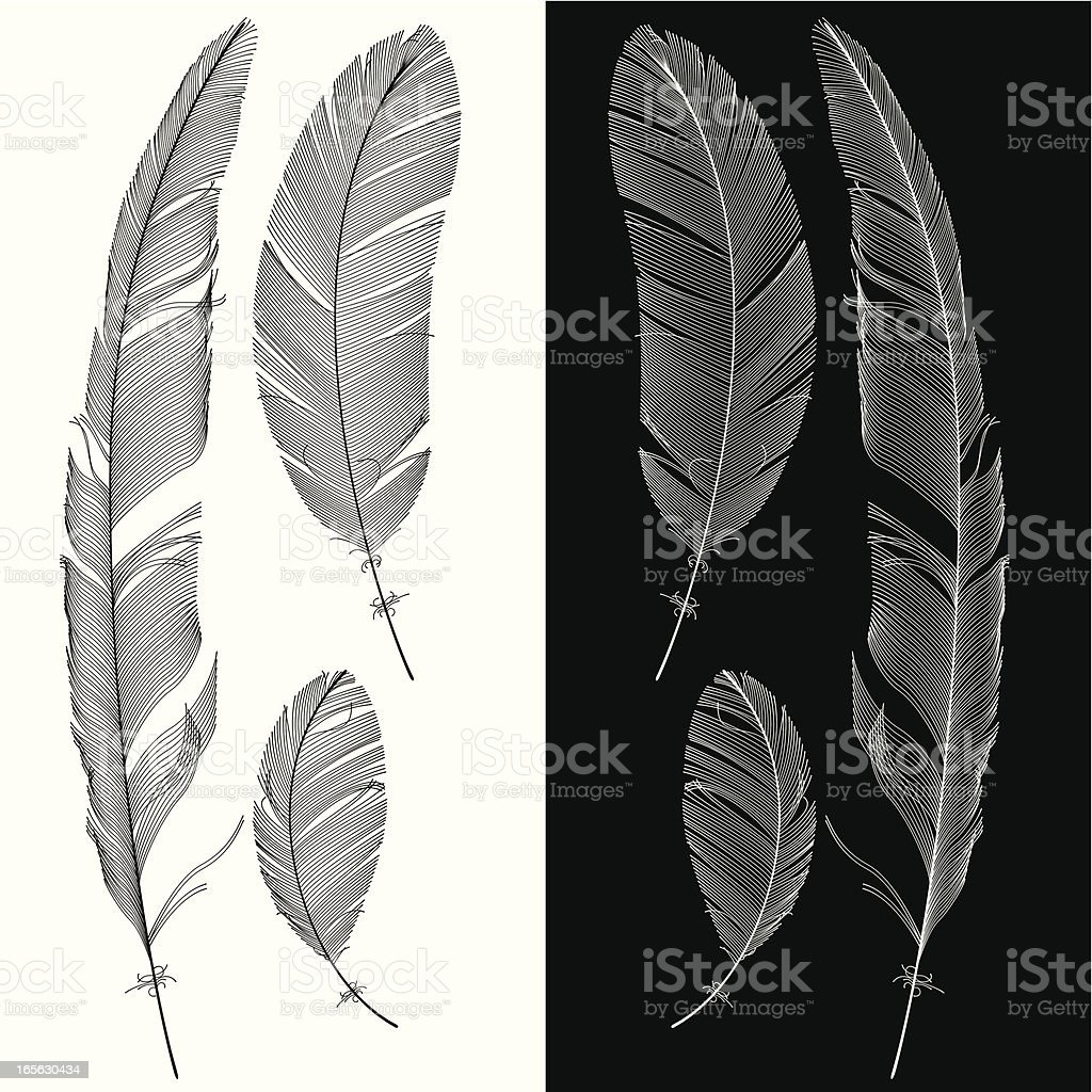 Set of Feathers vector art illustration