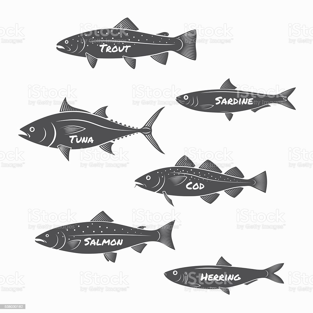 Set of fish silhouettes on white background. vector art illustration