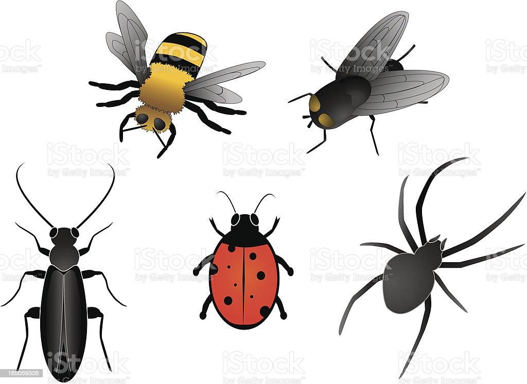 set of five bugs vector art illustration