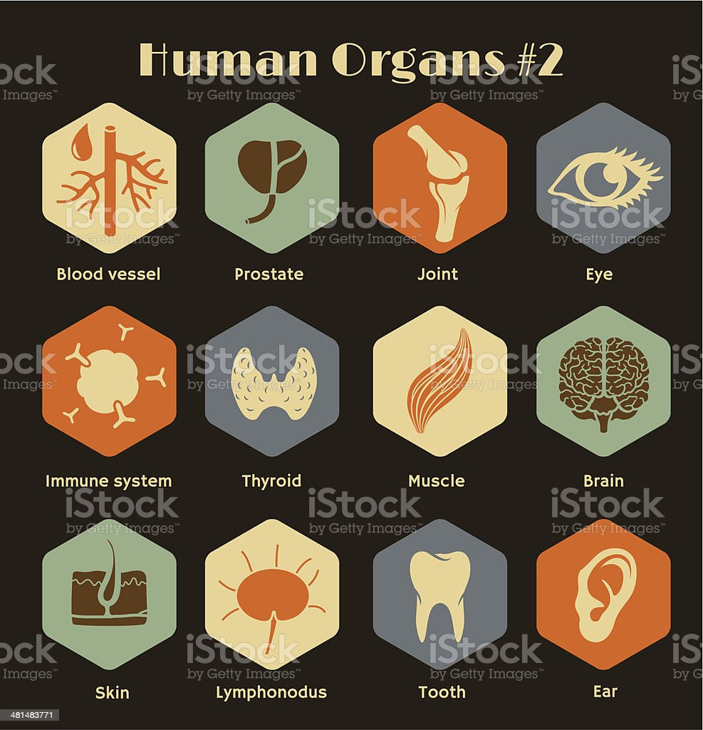 Set of flat retro icons human organs and systems vector art illustration
