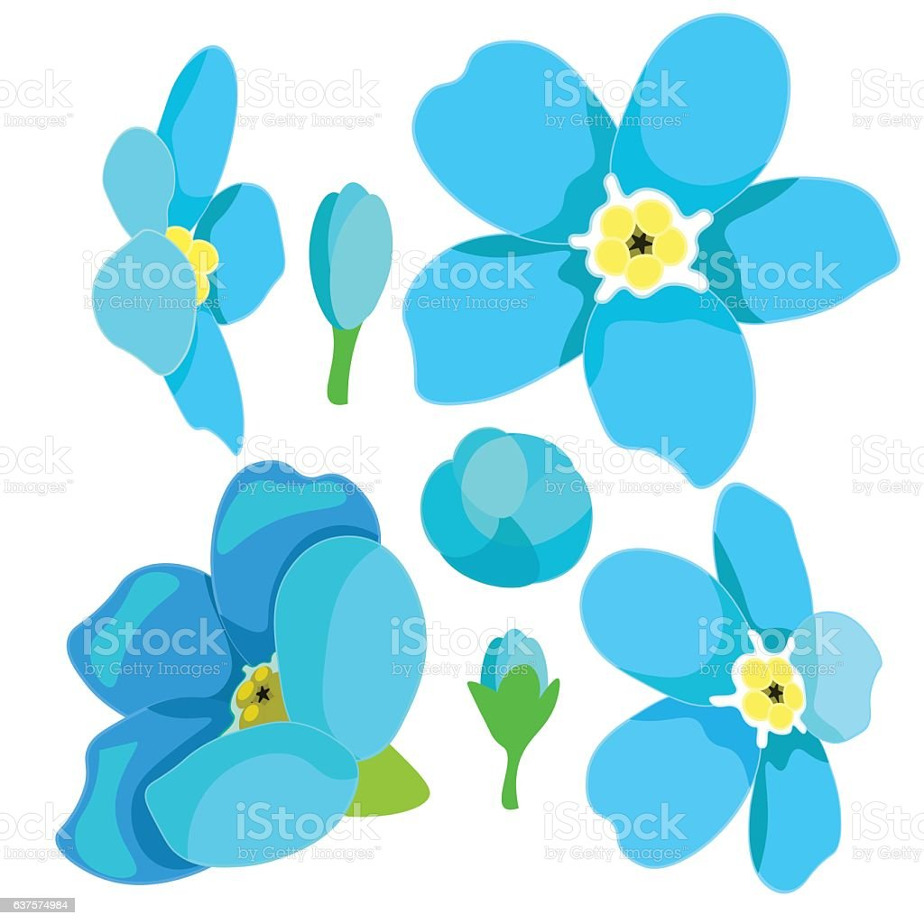 set of forget-me-alpine a wild flower. vector illustration vector art illustration