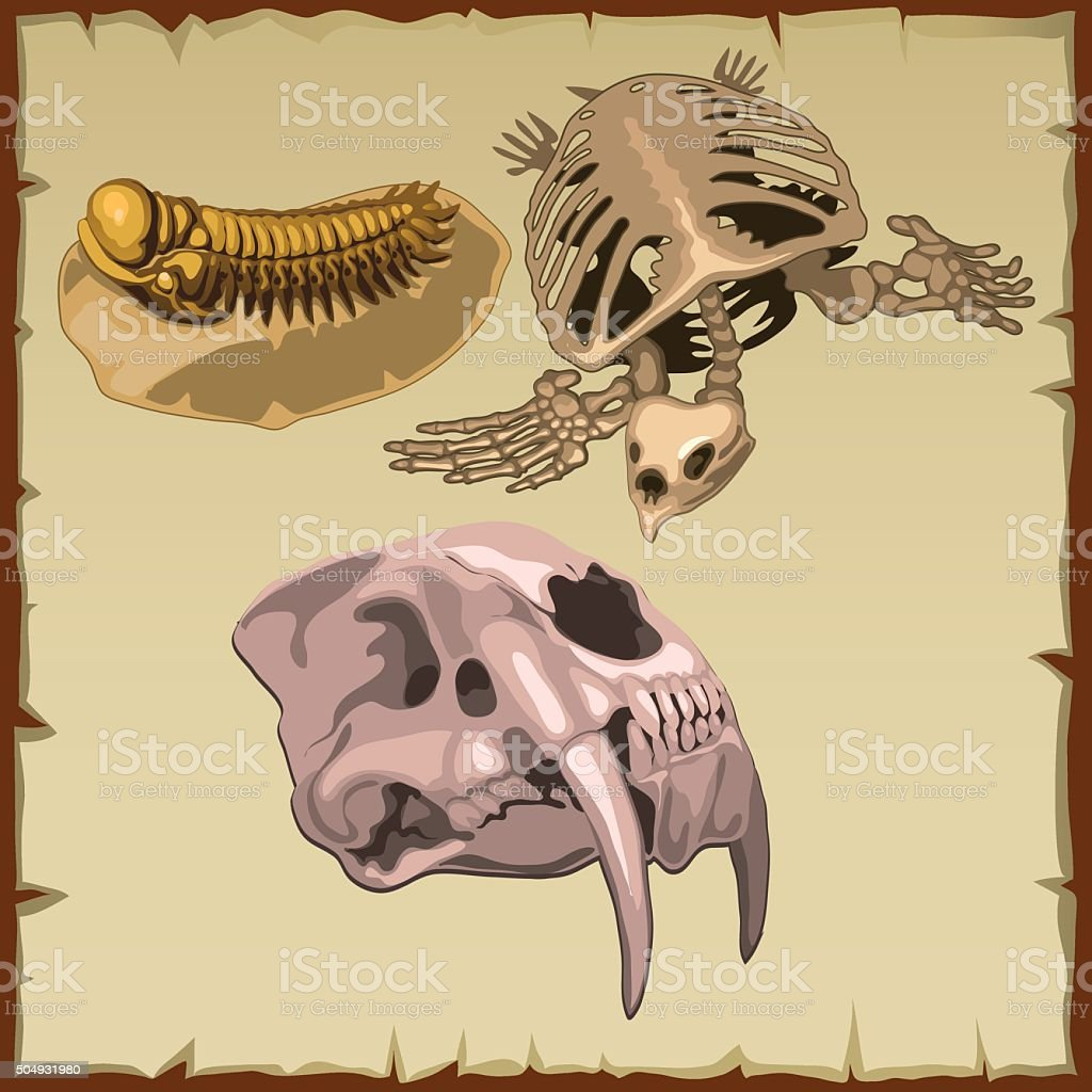 Set of fossil skeletons, three different animals vector art illustration