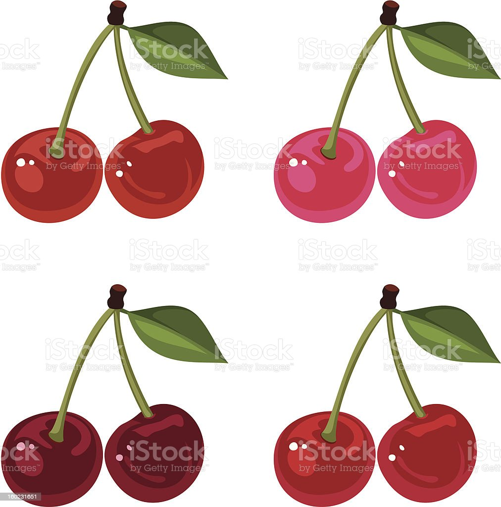 Set of four cherry bunches. Vector illustration. royalty-free stock vector art