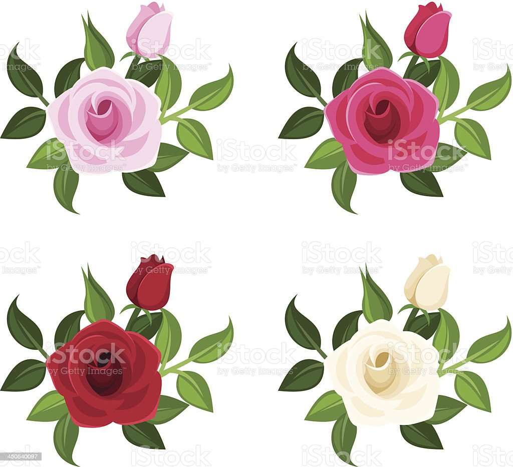 Set of four colored roses. Vector illustration. royalty-free stock vector art
