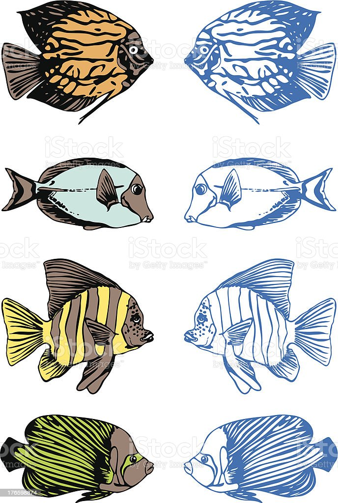 Set of four colorful fishes. royalty-free stock vector art