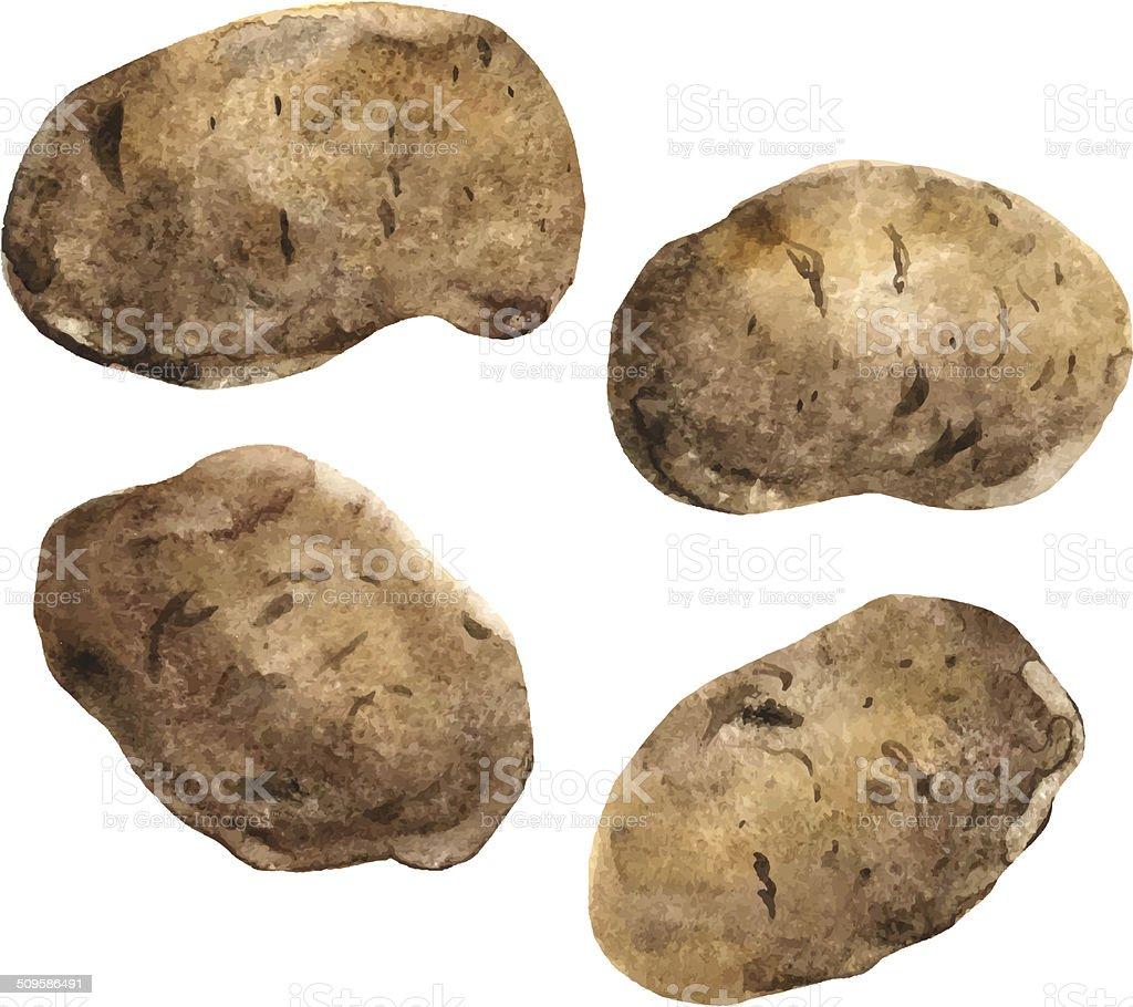 Set of four potatoes vector art illustration