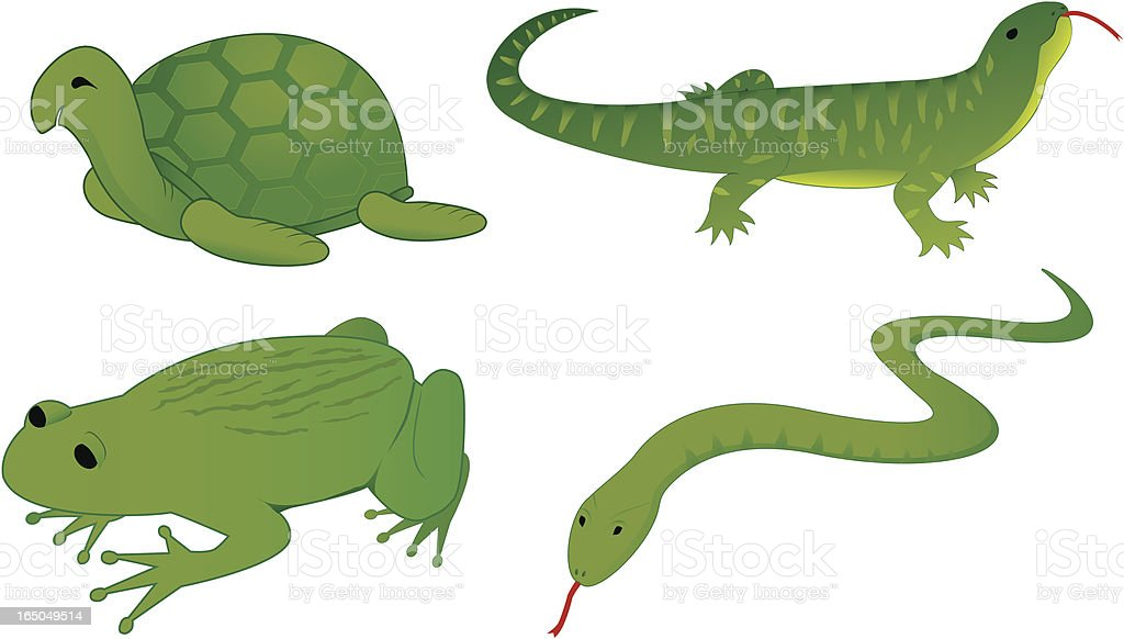 set of four reptiles royalty-free stock vector art