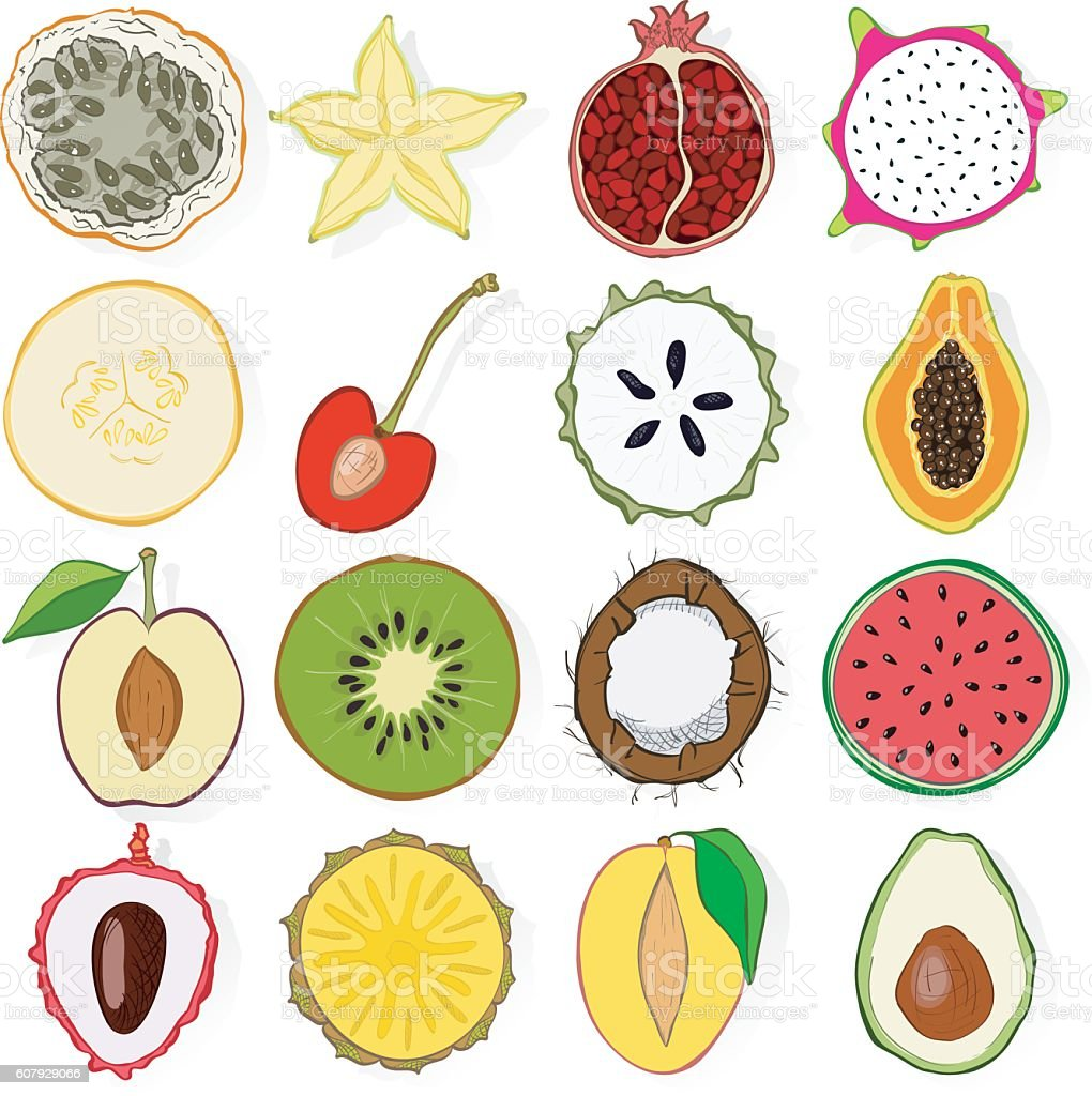 Set of fresh hand drawn fruits and vegetables and products. vector art illustration