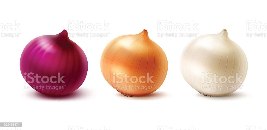 Set of Fresh Whole Yellow Red White Onion Bulbs vector art illustration