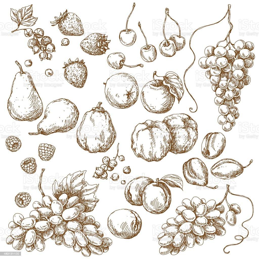 Set of Fruits  Sketch vector art illustration