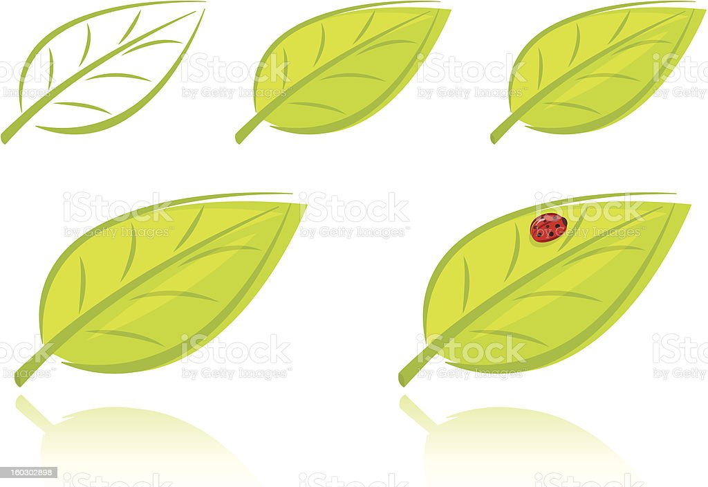 Set of green leaves royalty-free stock vector art