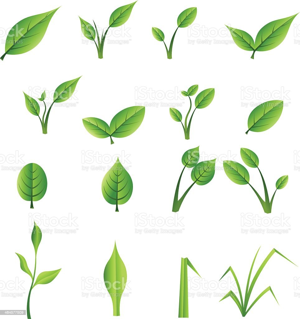 Set of green leaves vector art illustration