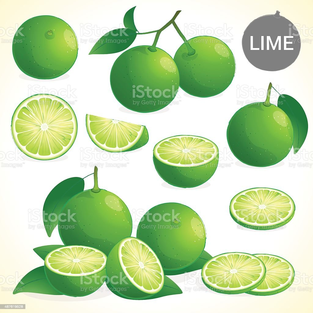 Set of green lime leaf in various styles vector vector art illustration