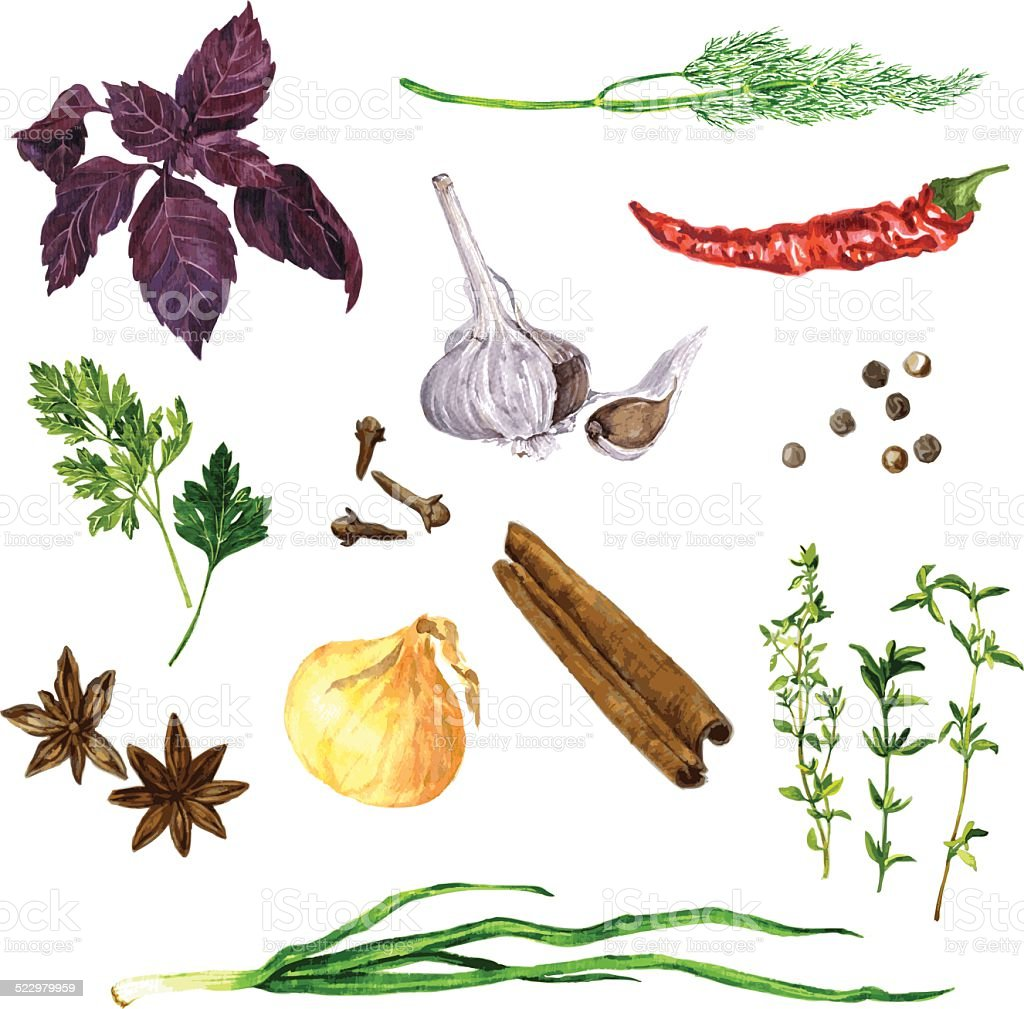 set of green stuff, spices and vegetables vector art illustration