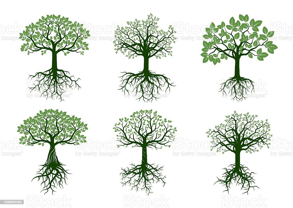 Set of Green Trees and Roots. Vector Illustration. vector art illustration