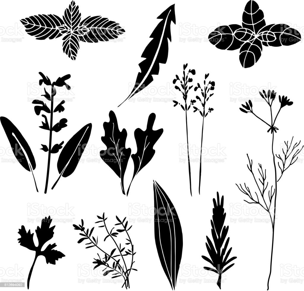 Set of hand drawn black herbs, vectors, isolated objects vector art illustration