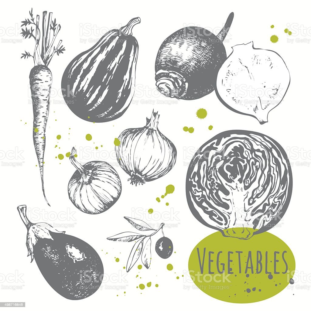 Set of hand drawn carrots, onions, cabbage, olives, eggplant. vector art illustration