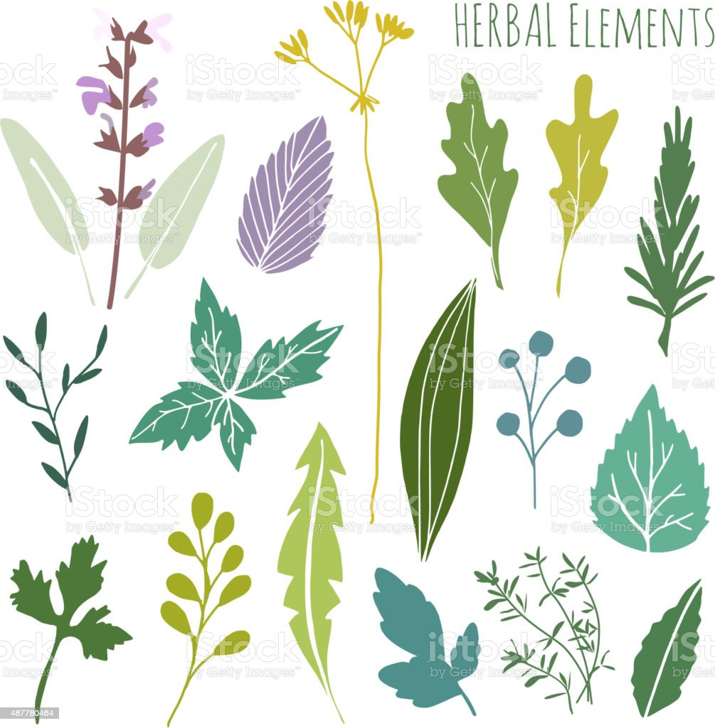 Set of hand drawn herbal graphic elements, leaves, vector vector art illustration