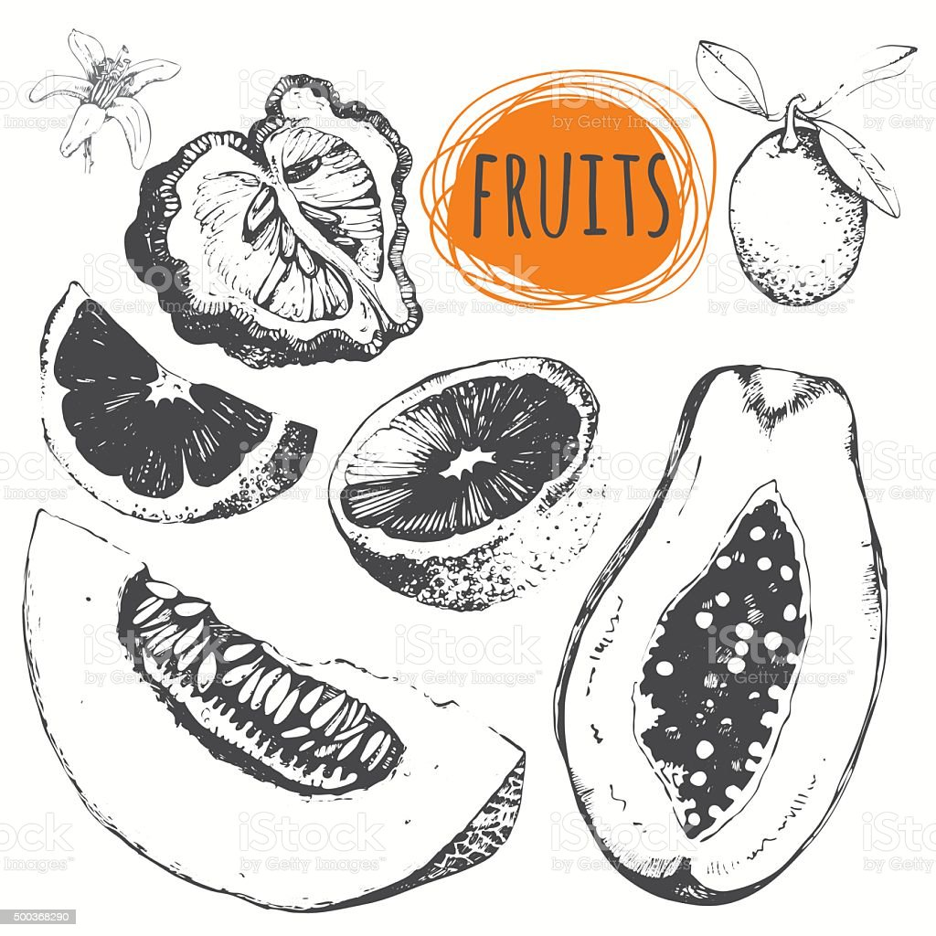 Set of hand drawn melon, papaya, bergamot, kumquat, orange. vector art illustration