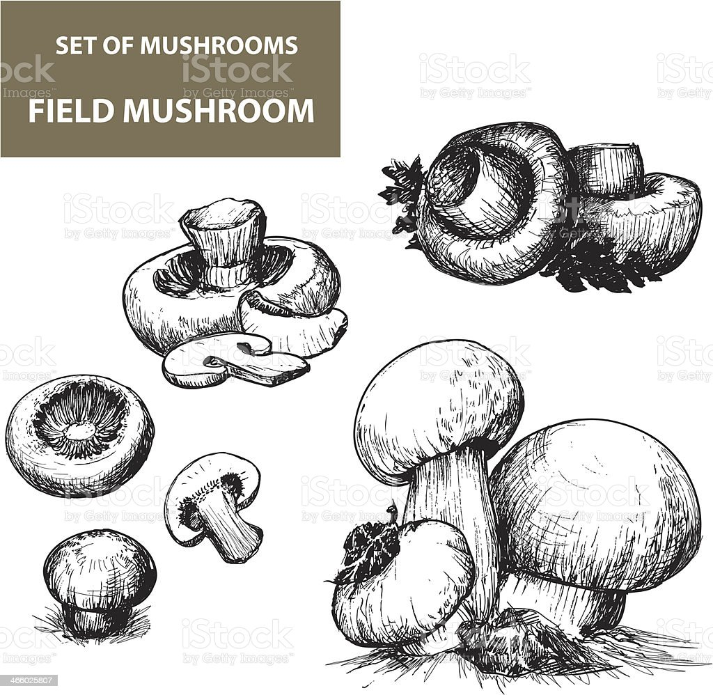 Set of hand drawn mushrooms with shading vector art illustration