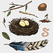 set of hand drawn nest. leaves. berry. egg and food