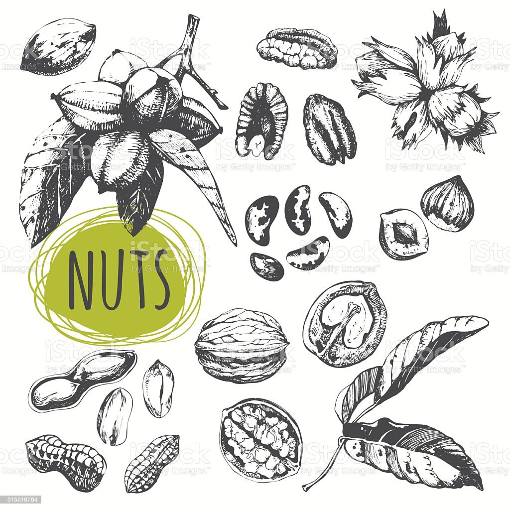 Set of hand drawn nuts. Black and white sketch food. vector art illustration